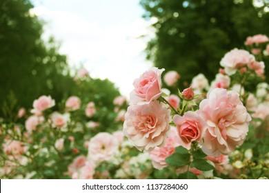flowera in park
