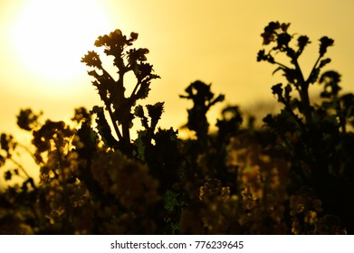 flowera of silhouette