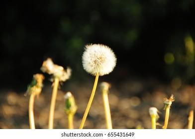flower,beauty flower