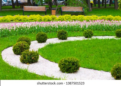 Flowerbed decoration of the city park. Flowerbed with tulips. Landscape design