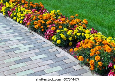 Flowerbed of different colors arranged along the edge of the green lawn and walkway of pavers. Flowers of different colors, yellow, orange, pink and red. Pavers brown.