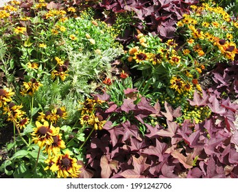 Flowerbed in the garden with black-eyed susan, coral bells, common tansy and zinnia