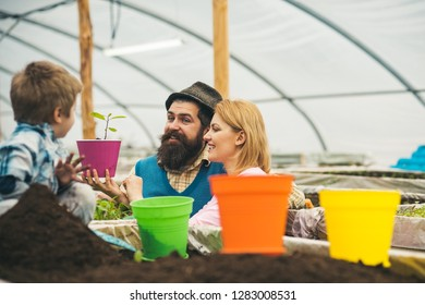 flowerbed. happy family work on flowerbed. greenhouse flowerbed concept. flowerbed with young plants. think green