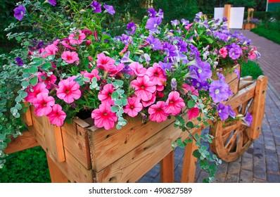 Flowerbed with purple petunias