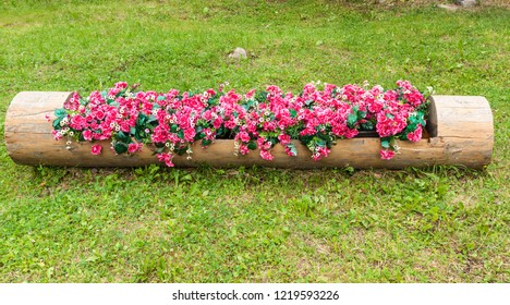 Flowerbed of red begonias and white daisies in hollowed tree trunk