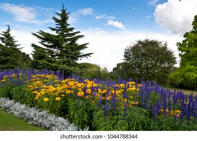 Flowerbed with yellow and purple flowers under a blue sky with clouds. Colorful summer in Chelmsford, Essex, United Kindom.