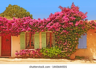 Flowered houses, doors and windows in Porquerolles island / Beautiful South of France and French Riviera view