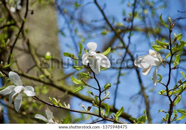 A flowered tree