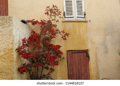 Flowered wall in Calvi village