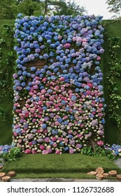 Flowered wedding wall. Decor with color hydrangea and roses. Wedding wall for ceremony and photo.