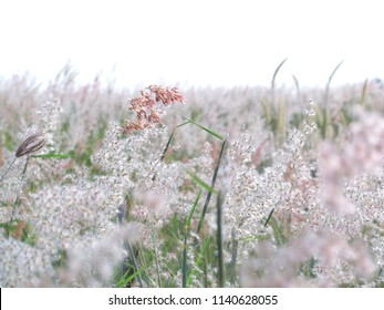 Flowerfield of flowers, pink flowers,Grass field background, flowers background