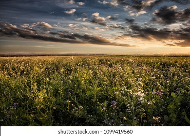 flowerfield sunset nature