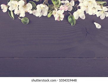 Flowering of the apple tree  on a dark wooden background.  Wreath with spring flowers. pring flowers of fruit trees on dark wooden background, top view, border