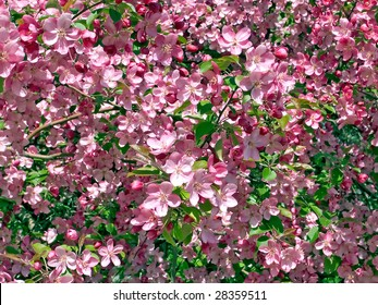 Flowering background.