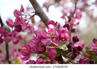 Flowering blooms on a tree.