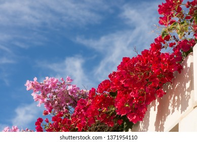 Flowering bougainvillea on a whitewashed Mediterranean facade against the background of blue sky