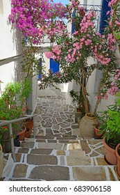 Flowering bougainvillea in pots in a Greek Village in the Cyclades Islands