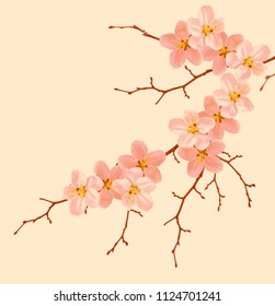 Flowering branch of cherry isolated on a pink background.