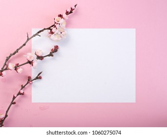 Flowering branch of a plum tree on pink frame.
