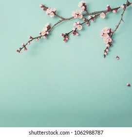 Flowering branch of a plum tree . View from above.