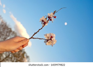 flowering buds in the hand against the sky