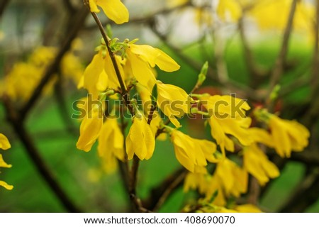 Flowering Bush Spring Yellow Flowers On Stock Photo Edit Now