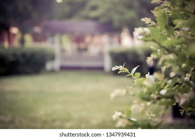 Flowering Bushes on a College Campus with Gazebo in Background