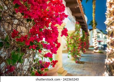 Flowering California. Beautiful Blooming Flowers in La Quinta. Winter in Coachella Valley, United States.