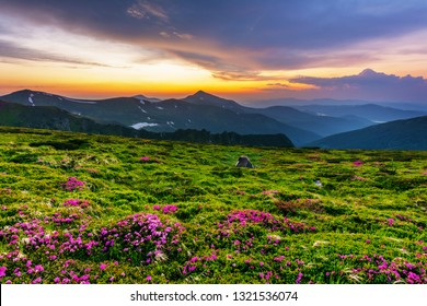 Flowering of Carpathian rhododendron on the Ukrainian mountain slopes overlooking the summits of Hoverla and Petros with a fantastic morning and evening sky with colorful clouds.