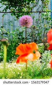 flowering decorative bow in the spring garden with a big red poppy in the foreground