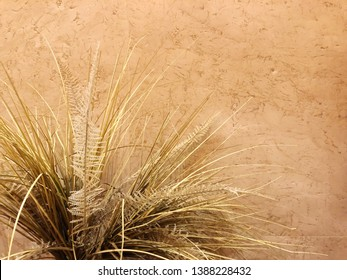 Flowering dried grass in a vase for room decoration.