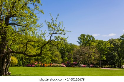 Flowering garden with great trees and a great lawn in the foreground