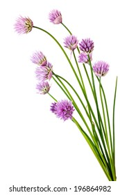 Flowering garden plant a shallot is isolated on a white background