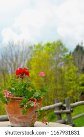 Flowering geraniums are in a terracotta pot on an outdoor table in the Austrian alps. Behind is a wooden fence and trees. White clouds fill the sky.