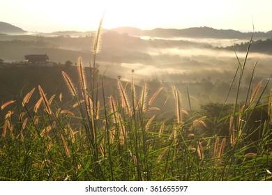 Flowering grass,