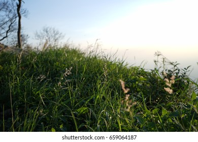 flowering grass in the morning
