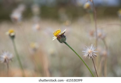 Flowering grass on roadside in the evening with blur background