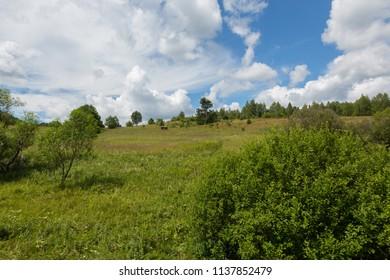 Flowering grassy meadow under blue cloudy sky in Bieszczady, Bieszczady,Podkarpacie,Poland,Europe