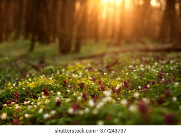 Flowering green forest on sunset , spring nature background