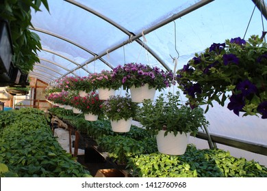 Flowering hanging baskets and other flowers inside a commercial greenhouse.