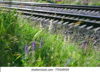 flowering herbaceous plants next to the railroad in the spring.