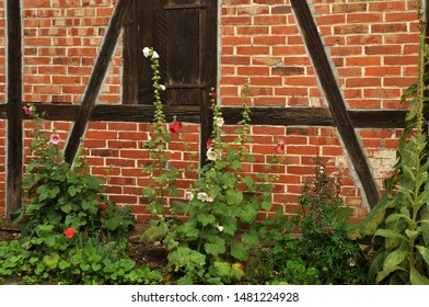 flowering hollyhocks in cottage garden in front of half-timbered facade of german farmhouse
