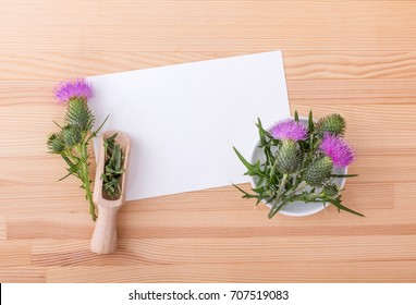flowering Mary thistle and copy space / Milk thistle / medicinal plant
