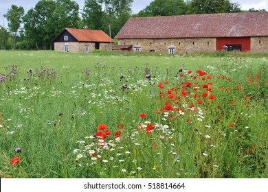 Flowering Meadow and farm house in the nature reserve area Kinnekulle, Sweden, Scandinavia, Europe. Kinnekulle is located on the eastern shore of lake Vanern. It is also a UNESCO biosphere reserve.