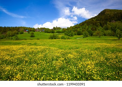 flowering meadows and village landscapes.savsat/artvin/turkey