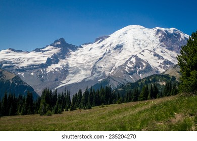 A flowering mountain meadow surrounded by pine forest, with Mount Rainier in the background