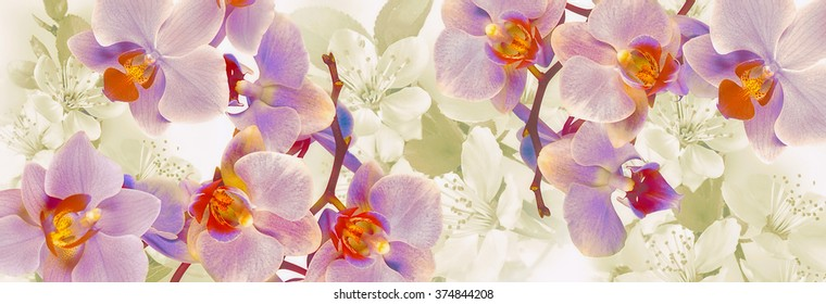 Flowering orchids and cherries panoramic decoration