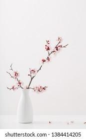 flowering pink cherry branch in  vase on white background