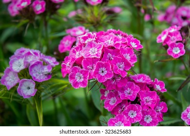 flowering plant wallpaper