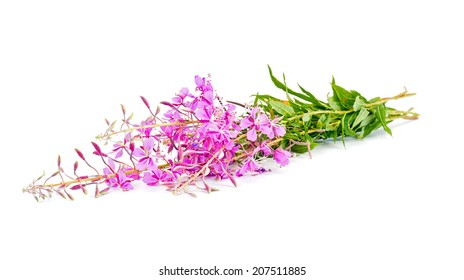 Flowering plant of Willow-herb, it is isolated on a white background